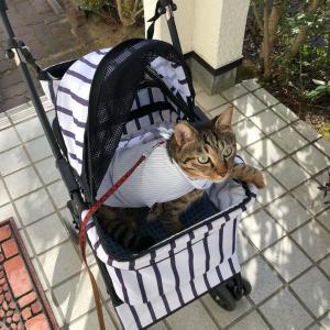 猫的散歩日和