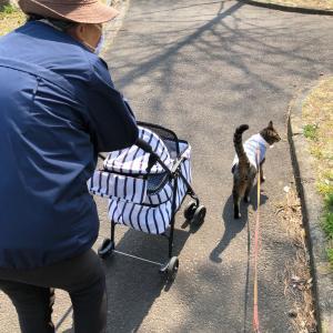 お婆ちゃんと気晴らし散歩