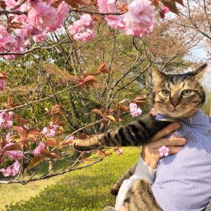 八重桜と桜茶とミニチュアドールハウス