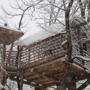 雪のツリーハウス