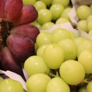 信頼できる仲間が美味しい葡萄生産者という幸運