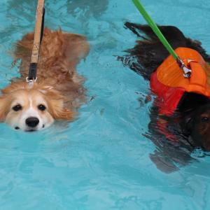 そろそろ温水プールの季節ですね