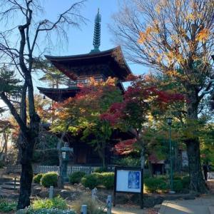 豪徳寺の紅葉 & 世田谷八幡の新たな発見