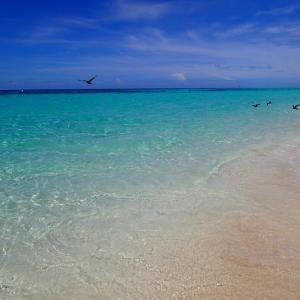 南の島写真♡