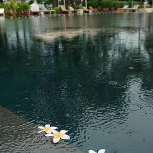 ■雨季で雨の降った朝★シンガポール