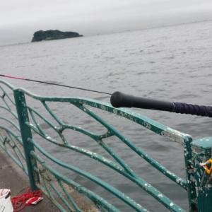 大雨の中で大サバ釣ってきました