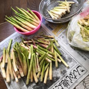 三密自粛中:'20山菜採りからのタケノコ採り