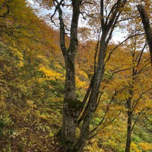 秋・お山散策でイノシシの痕跡