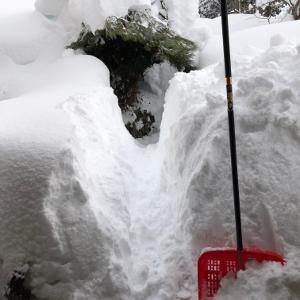 速報:雪害再び