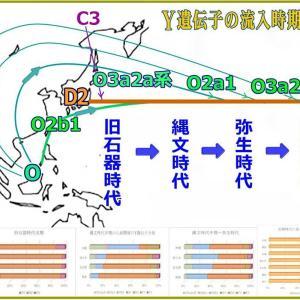 Y遺伝子の流入時期と経路図