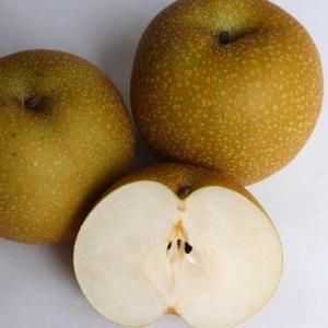 ベジフルインフォネット101号 梨のみつ症