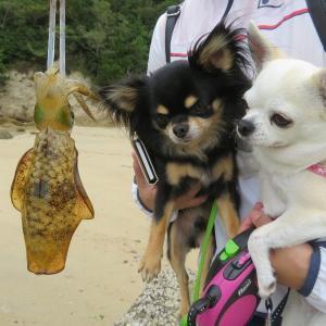 長浜海岸でお散歩&エギング