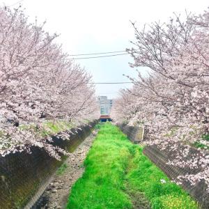 春の便り☆