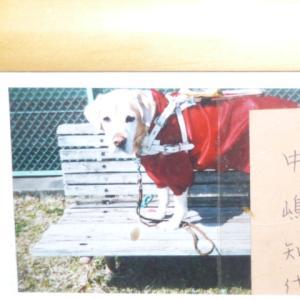 盲導犬ナンシーちゃんと知代さん