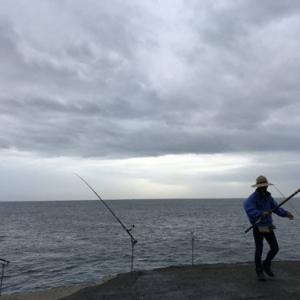 勝浦市漁師 父の釣り仲間が「石鯛」を釣って来てくれました~