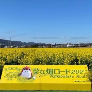 鴨川市 菜の花ロード