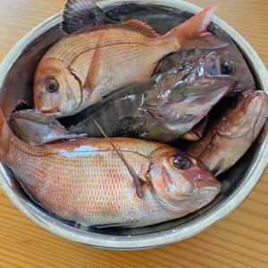 テレワーカー御用達!?いすみ市にある地魚定食が美味しい「藤与し」さんに行ってきました!
