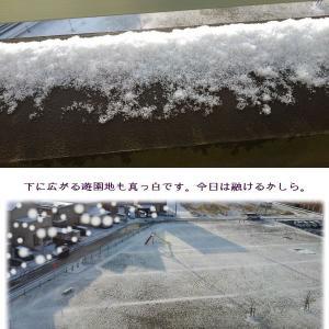 初めての冬景色・デンマークカクタスの開花