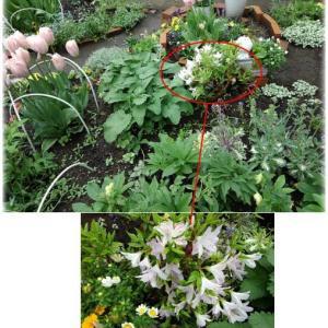 そろそろ次のシーズンへ向けてお庭の改造を考えようかな。