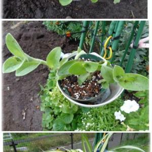 冬仕舞スタート・室内管理の植物・残すお花と整理する花・
