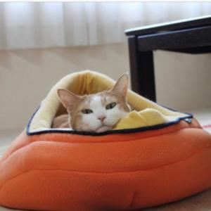 ビミョーにバランスを取っていた猫