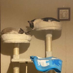 保護猫通信と、とら吉その後