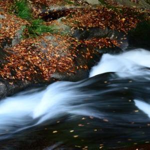 奥三河、渓谷の落葉