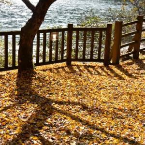 奥三河の秋「みどり湖」ドウダン