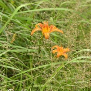 探していた花