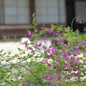 ぷらり龍潭寺
