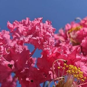 百日咲き続ける紅の花とは?