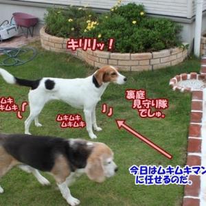 モモ特集・モモ6歳の誕生日(長文)