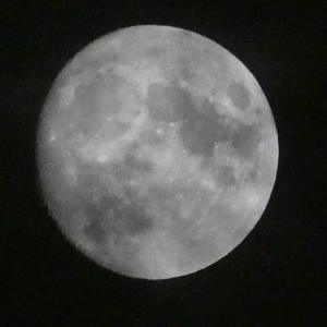 十三夜のお月見!
