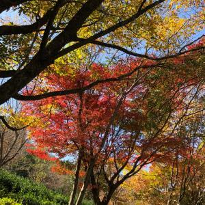 秋っぽい写真見せて!