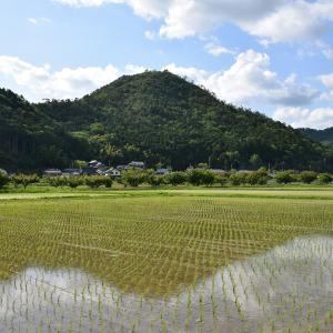 丹波八百里城(矢尾利城)攻城記。 <前編>登山道~八百里稲荷神社