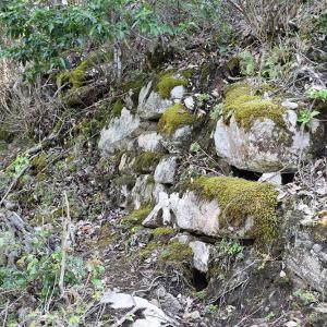 天橋立を望む丹後八幡山城跡。 その3 <主郭~帯曲輪>
