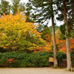 室町時代の庭園が残る多気北畠氏城館跡を訪ねて。<後編> 武家庭園
