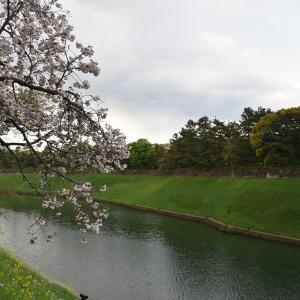 江戸城を歩く。 その10 「半蔵濠~半蔵門~桜田濠」