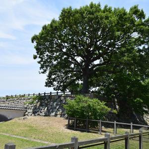 築城400周年の明石城を歩く。 その6 <本丸~天守台・人丸塚~>