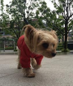 雨の散歩道なのだー。