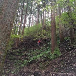 大黒柱になる木!伐採の様子