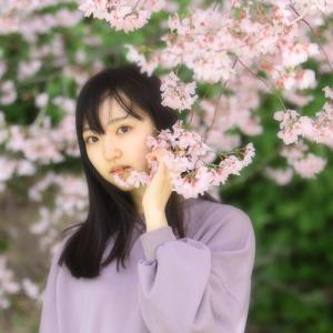 桜満開(京野ラサ)