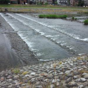 河川整備20133記事 魚止め堰堤→川幅全部魚道の例→稚鮎とウナギが全部遡上する堰堤魚道にした