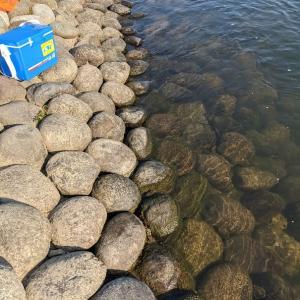 鮎毛バリつり釣り場にあゆを集める 方法その1