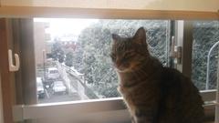 元旦…雪…猫!♂