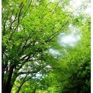 箱根 ♡ 甘酒茶屋