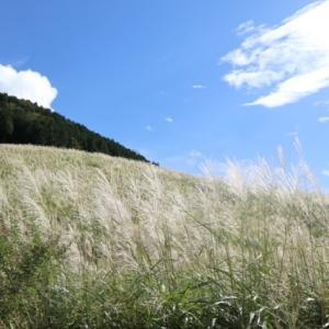 仙石原すすき草原 ♡
