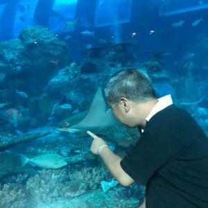 シンガポール・その11「クラゲって見てると不思議感覚に陥る」