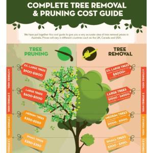 庭の木伐採費用大公開☆ブリスベン周辺