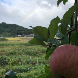 台風過ぎ去りゃ虹もでる。